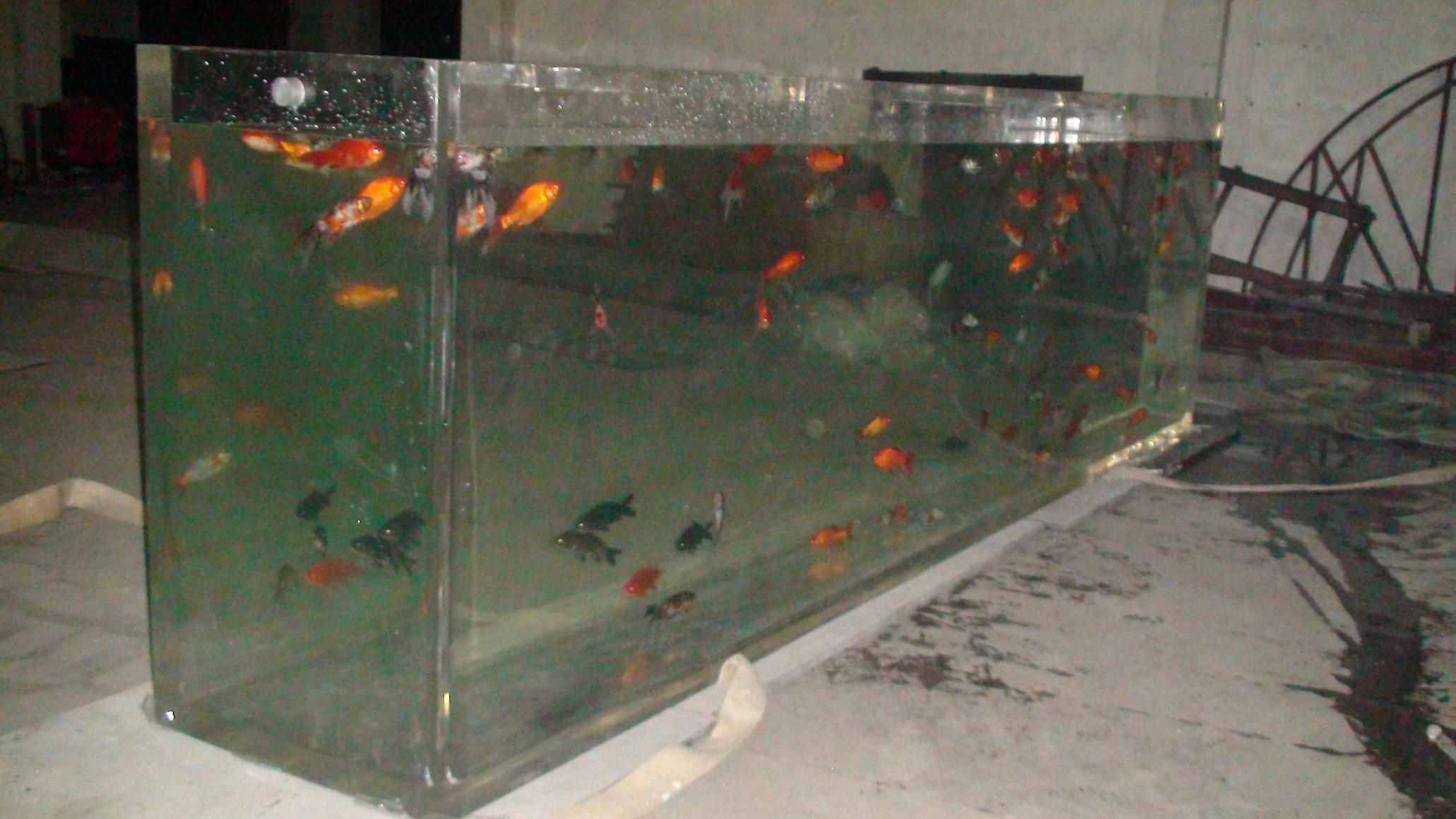 China rectangular fish tank photos pictures made in for Rectangle fish tank