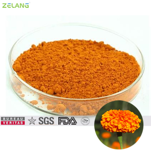 Tagetes Extract Powdered 80% Lutein for Food Supplement