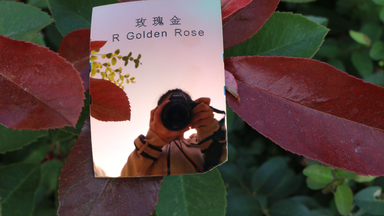 Colorful Eyeglasses Polarized Tac Lens (R Golden Rose)