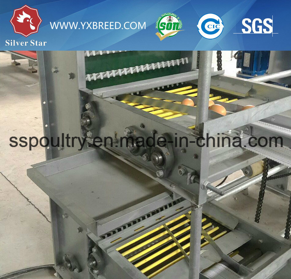 H Frame Layer Battery Equipment Cage for Chicken Birds Farm