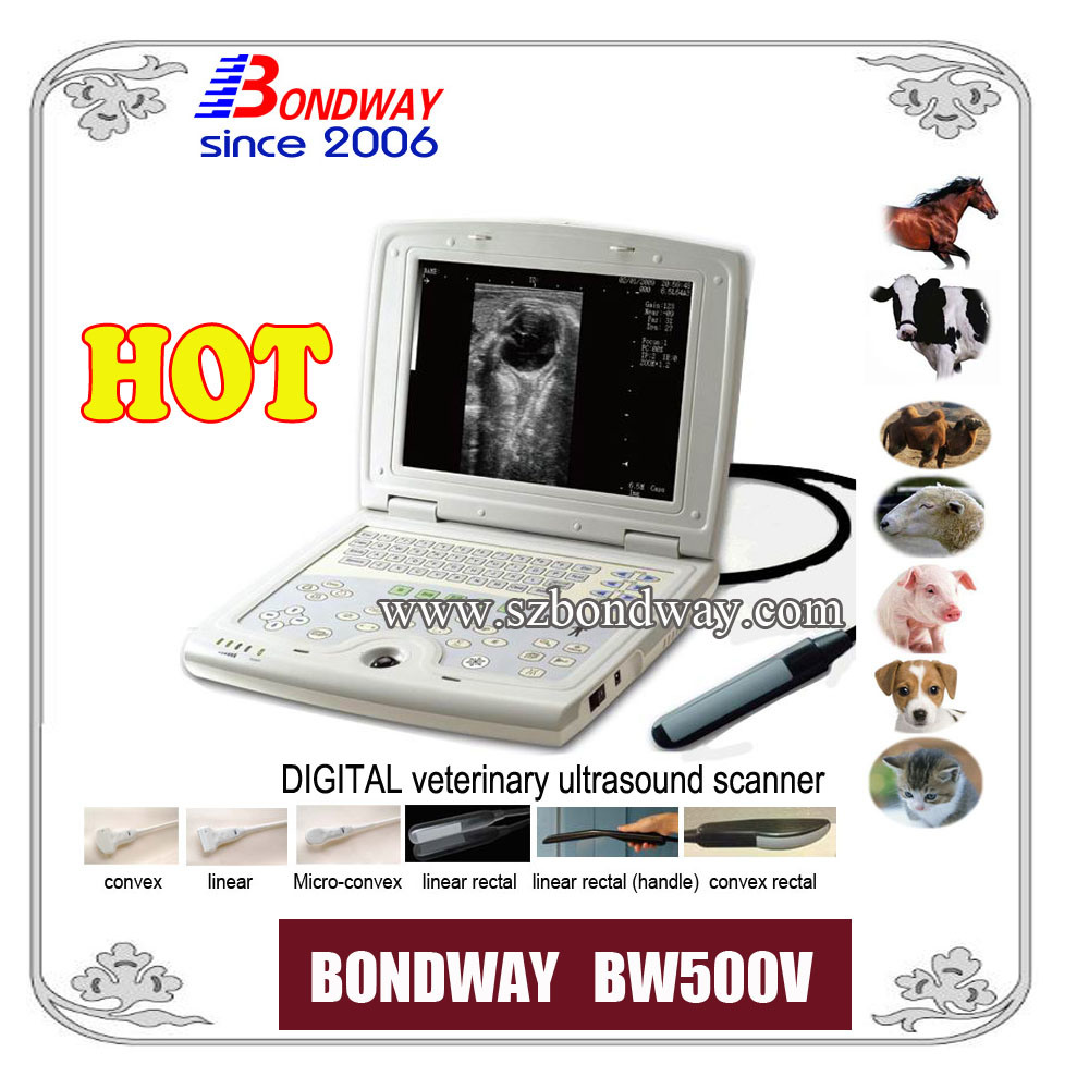 Equine Ultrasound Scanner for Veterinary Use, Horse, Cow, Camel, Cat, Dog, etc
