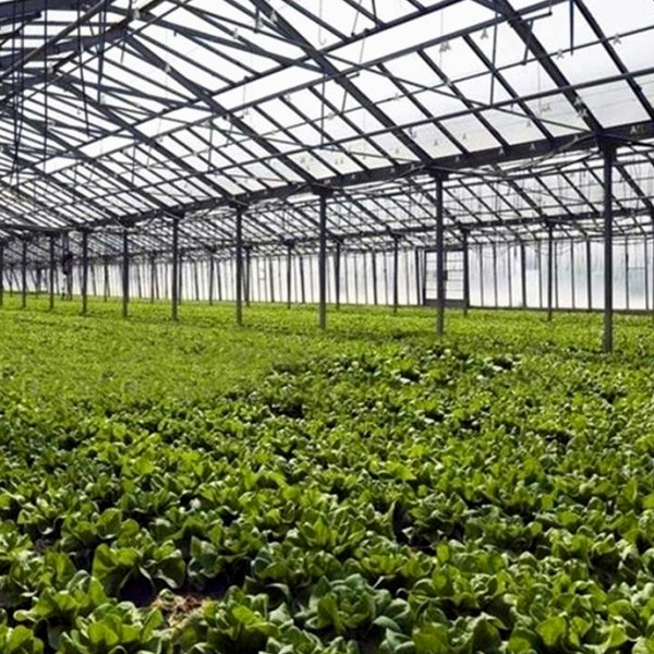 2016 Cheap & Hot Agriculture Greenhouse Film/Greenhouse Plastic Cover