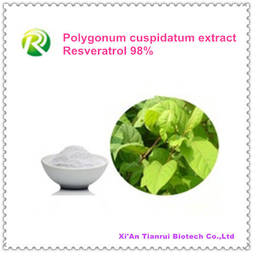 High Quality 100% Natural Plant Extract Resveratrol Powder