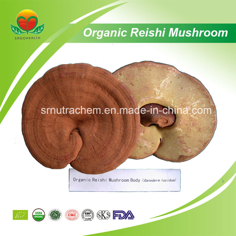 Manufacturer Supplier Organic Reishi Mushroom
