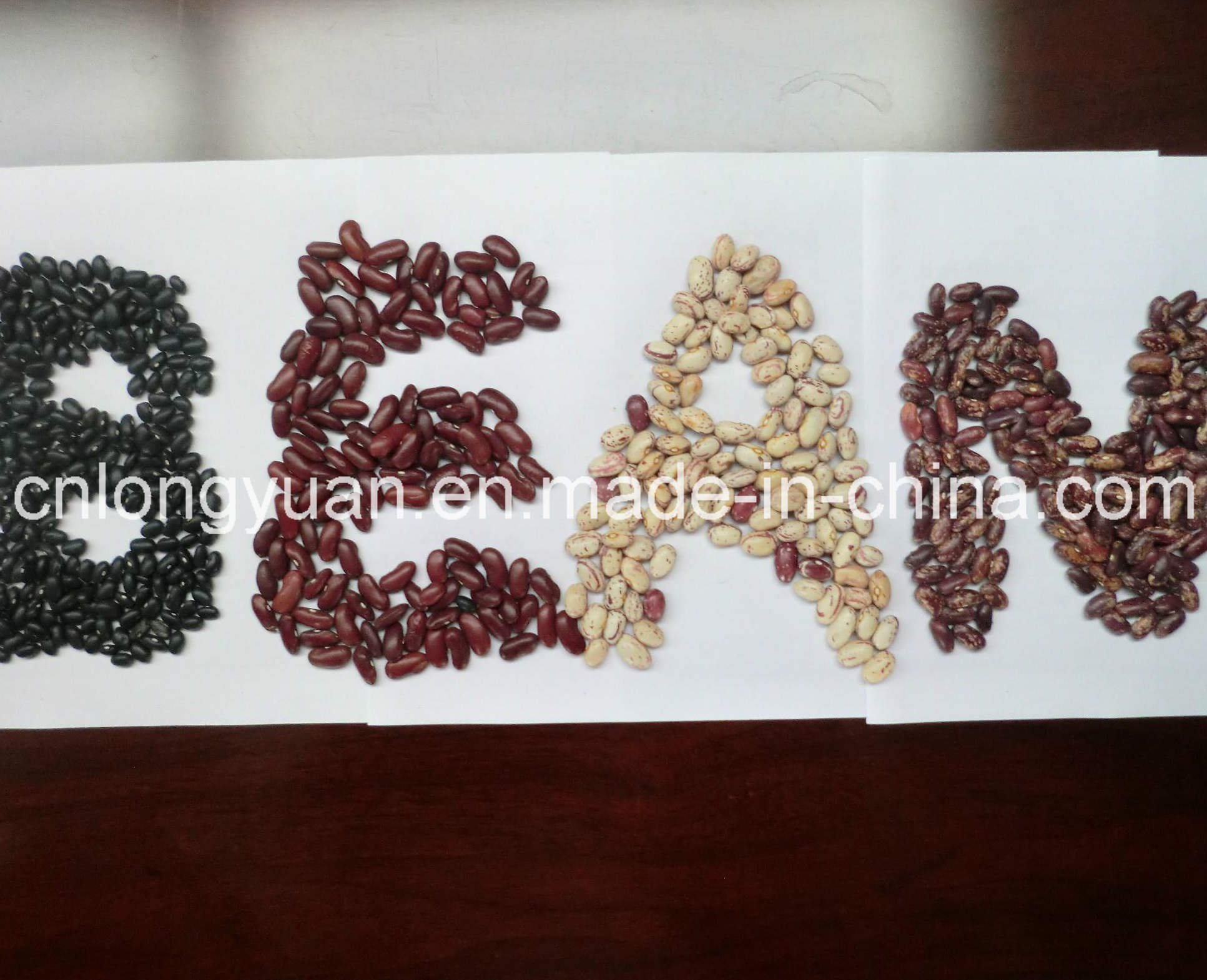 White Kidney Bean with Good Quality