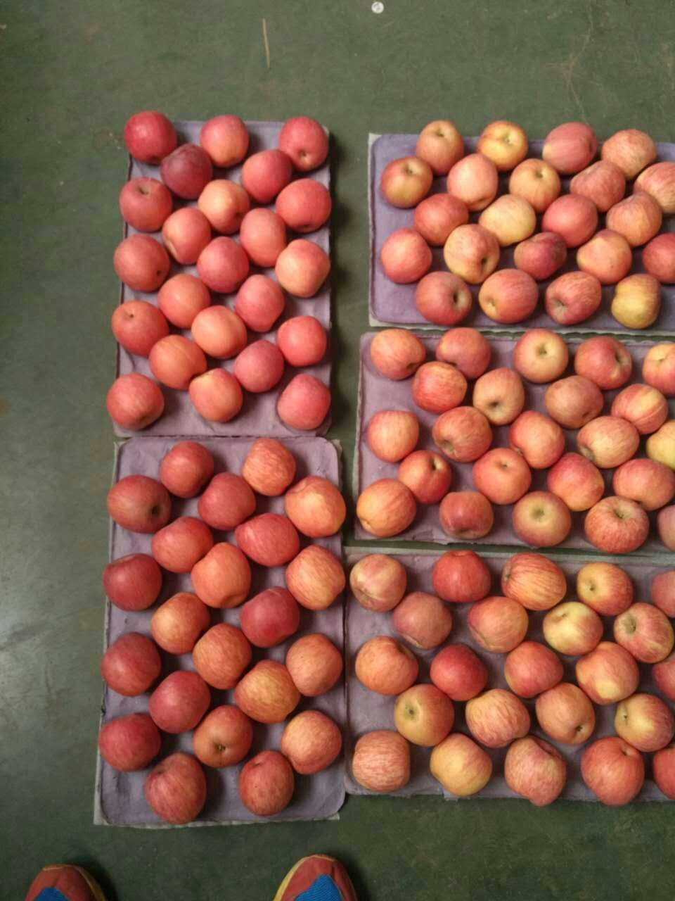 New Crop Exporting Standard FUJI Apple