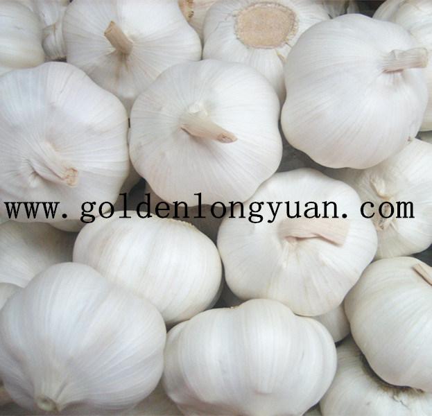 2017 New Season Fresh Garlic Top Quality
