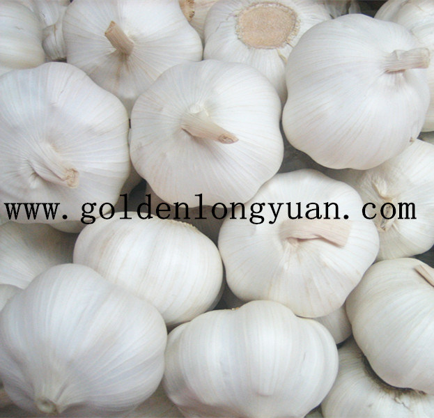 New Season Fresh Garlic Top Quality