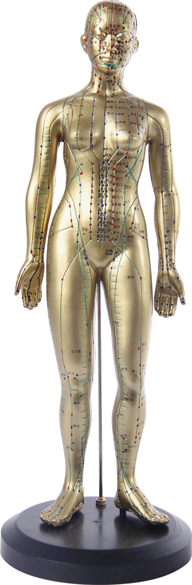 Female 48cm Acupuncture Model