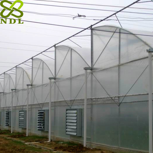 Advanced Plastic Film Agricultural Greenhouse for Rose Planting