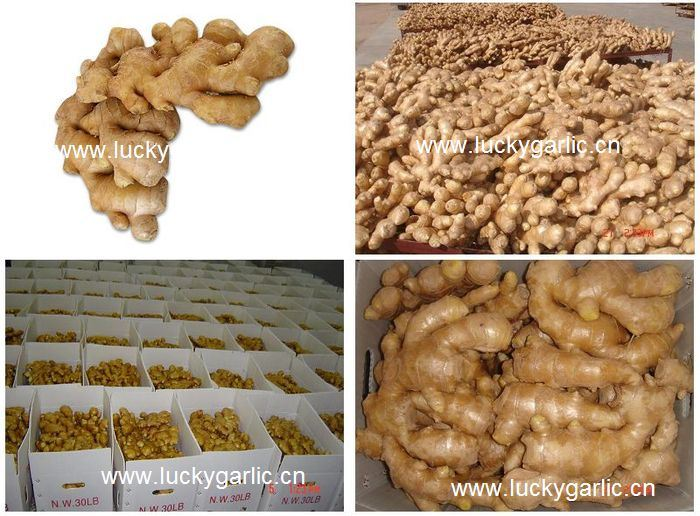 Fresh Ginger Good Quality Cheap Price