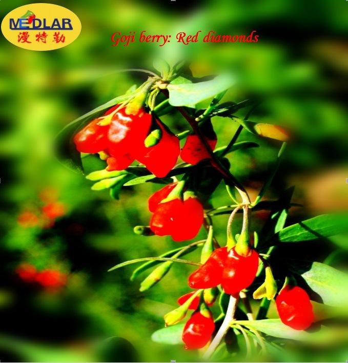 Ningxia Organic Super Fruit--Goji Berry (Wolfberry) (2016 hot sale) , 280PCS/50g