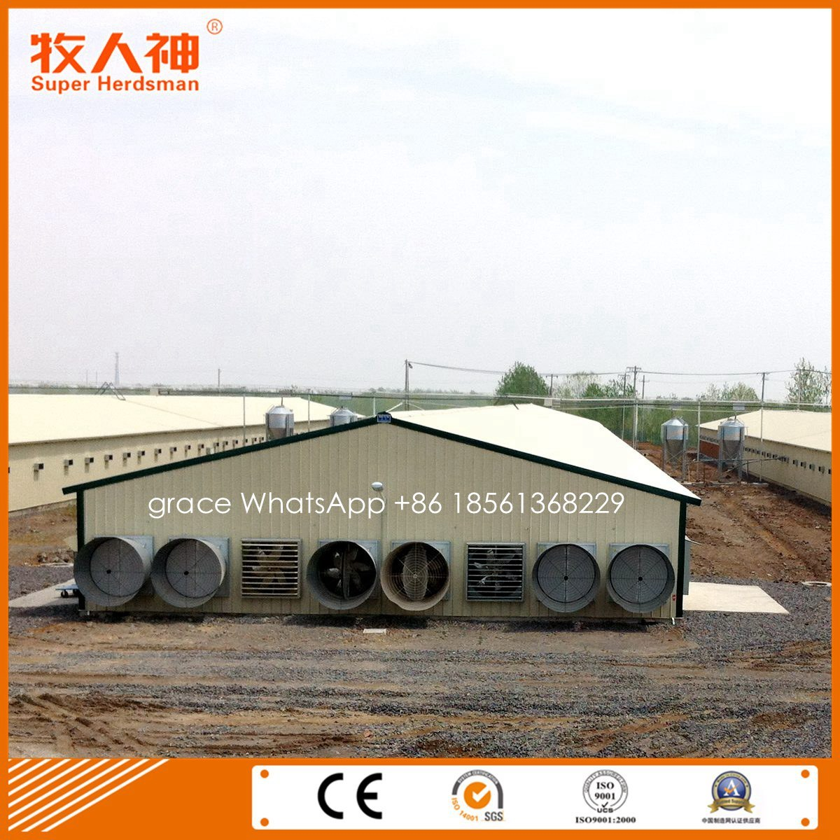 Profession Design Chicken Farm Shed Construction with Housing Equipment