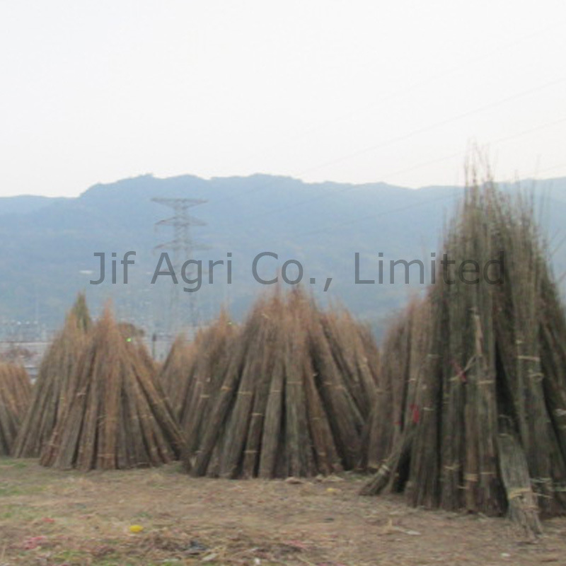 Guangdong Bamboo Production for Agriculture