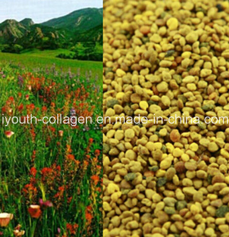 Top Pollen 100% Natural Wild Mountain Flower Bee Pollen, No Antibiotics,No Pesticides,No Pathogenic Bacteria,Nourish Internal Organs,  Prolong Life, Health Food
