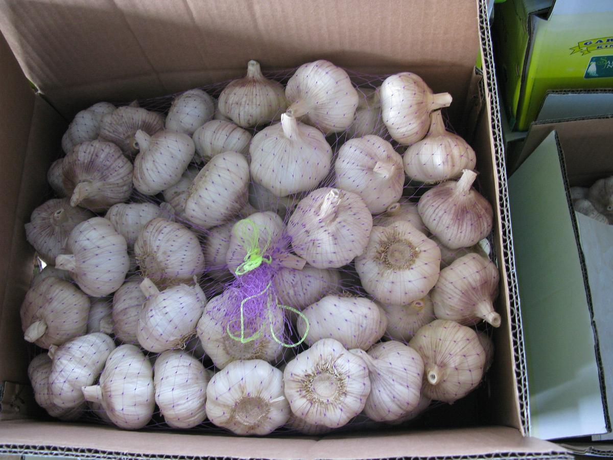 Professional Exporting Normal White Garlic (5.0cm and up)