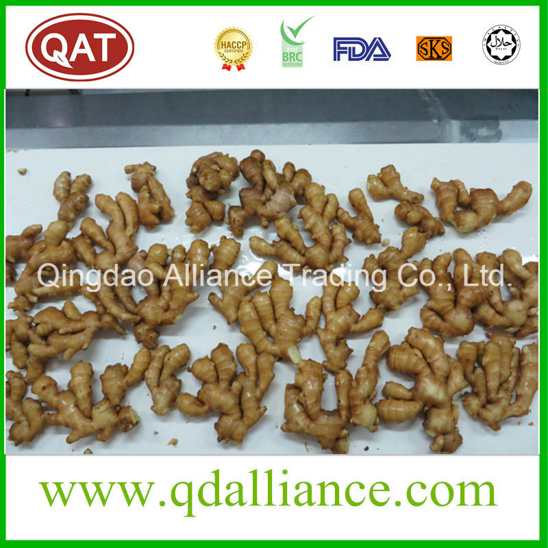 2017 New Ginger with Good Price