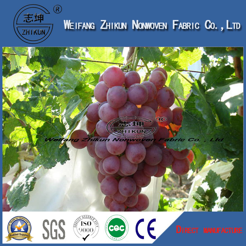 PP Non Wovens for Agriculture Frost Cover with High Quality