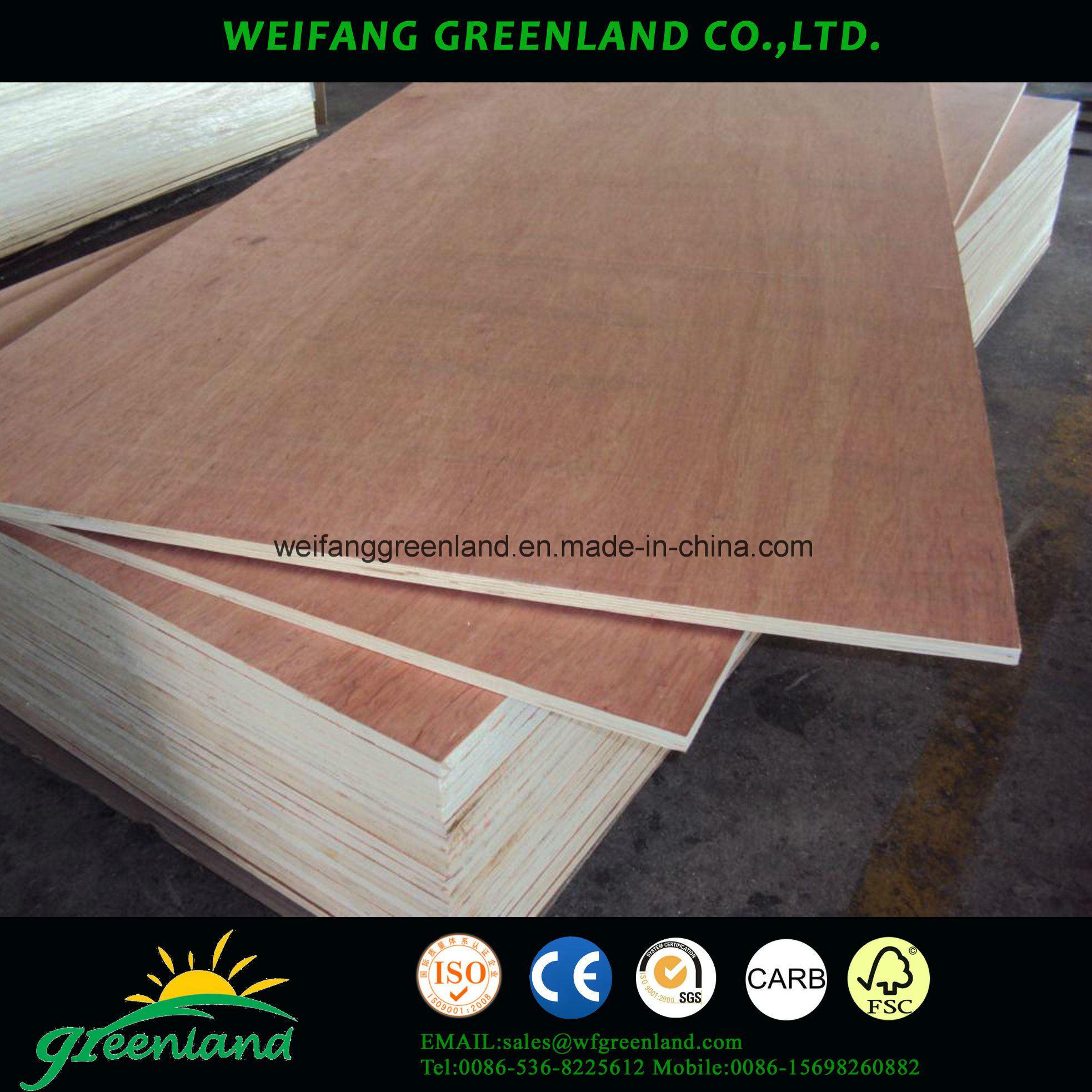 Bintangor Film Plywood with High Quality Poplar Core, Mr Glue