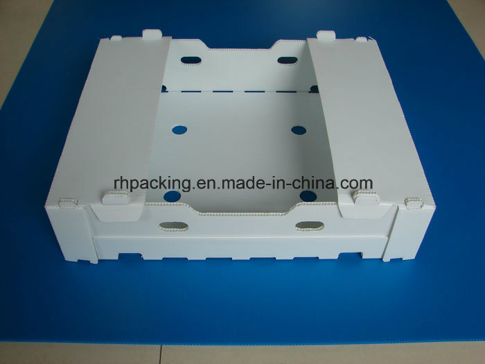 PP Folding Box/PP Plastic Boxes and Lid for Packing Instead of Paper Boxes