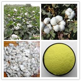 Natural Cotton Seed Extract Gossypol