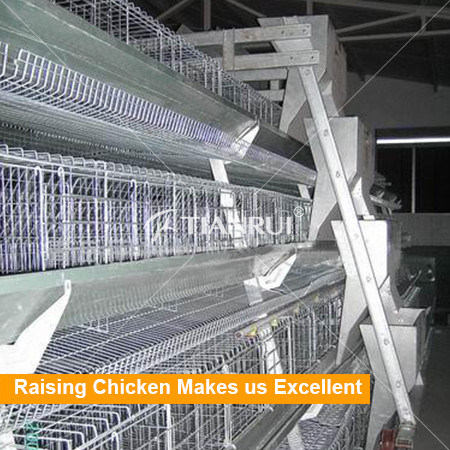 Tianrui Design A type full automatic layer poultry farming equipment price
