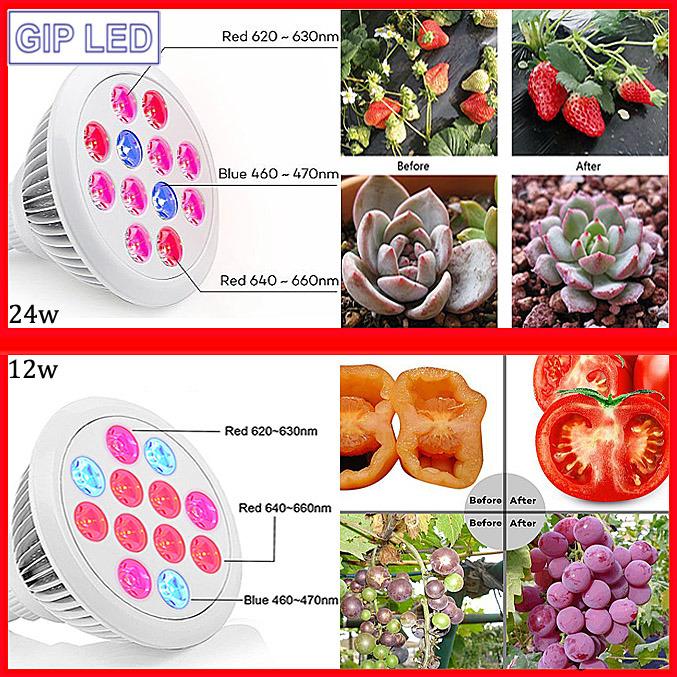Best Seller 12W 24W E27 LED Grow Lights for Home Plants