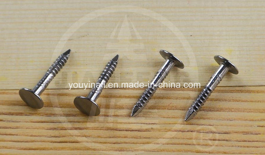 Big Cap Stainless Steel Nail