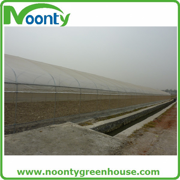 Greenhouse Anti Insect Net with Good Quality