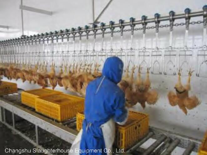 Poultry Farm Equipment