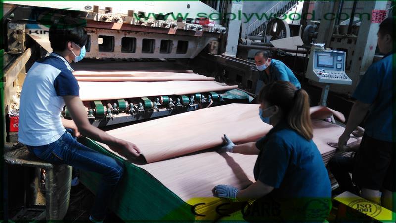 EV Engineered Wood Veneer From Linyi Factory