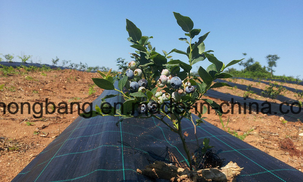 Nongbang Greenhouse Gardening Weed Mat