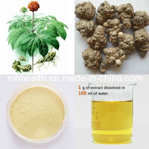 Sanqi Extract Panax Notoginseng Extract High Blood Pressure Notoginsenosides 20 PCS/Per 500 G