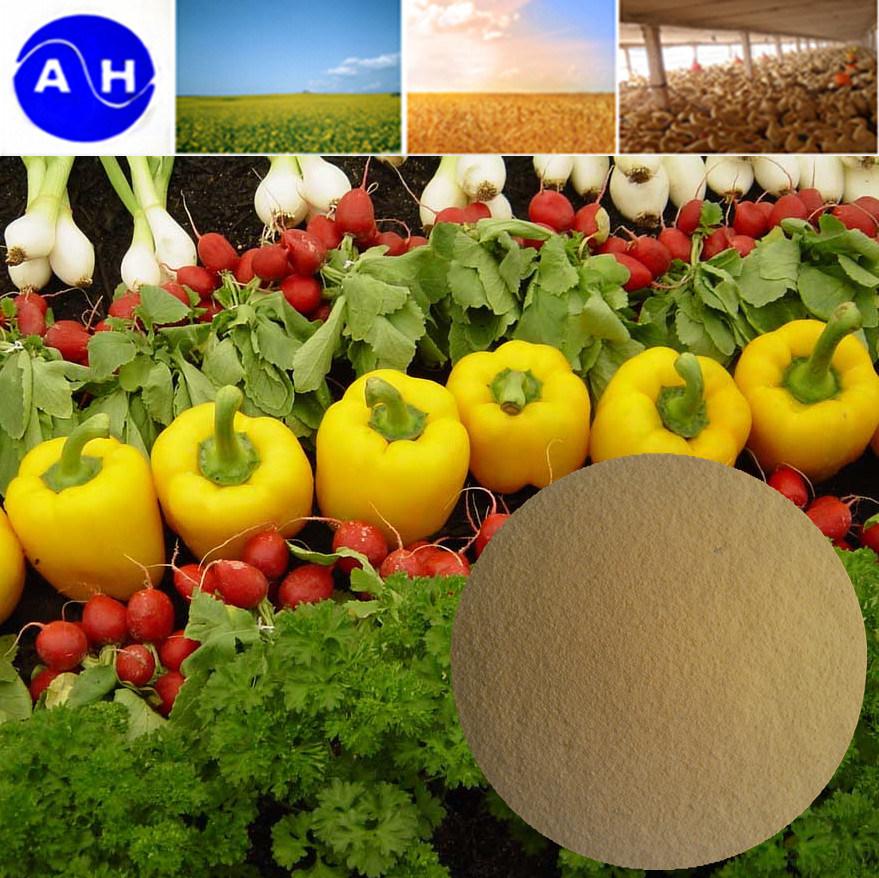 High Content Organic Magnesium Chelate Amino Acid