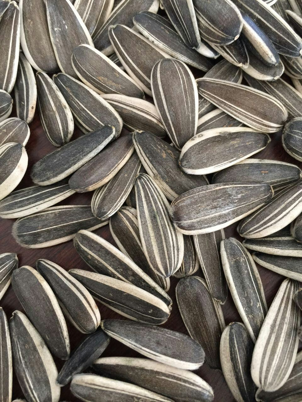 Professional Exporting High Quality Sunflower Seeds