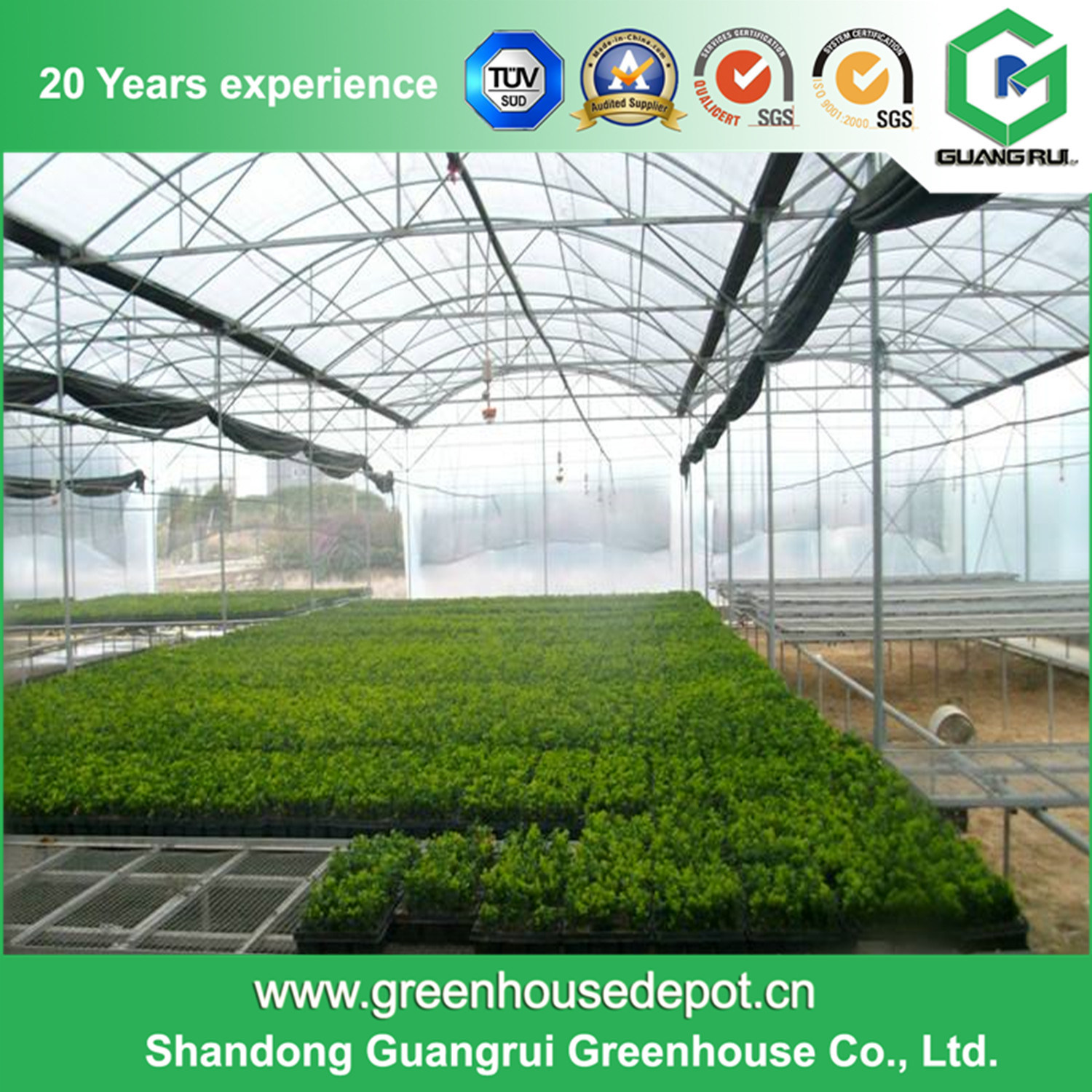 Multi-Span Gothic Film Greenhouse for Farm