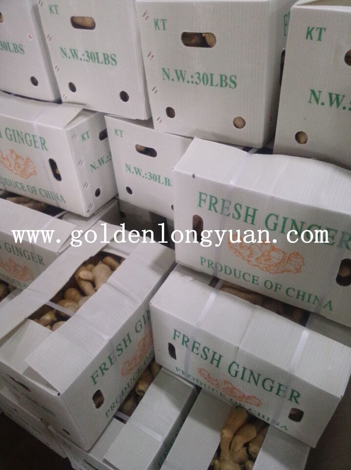 New Season Air Dry Ginger From China