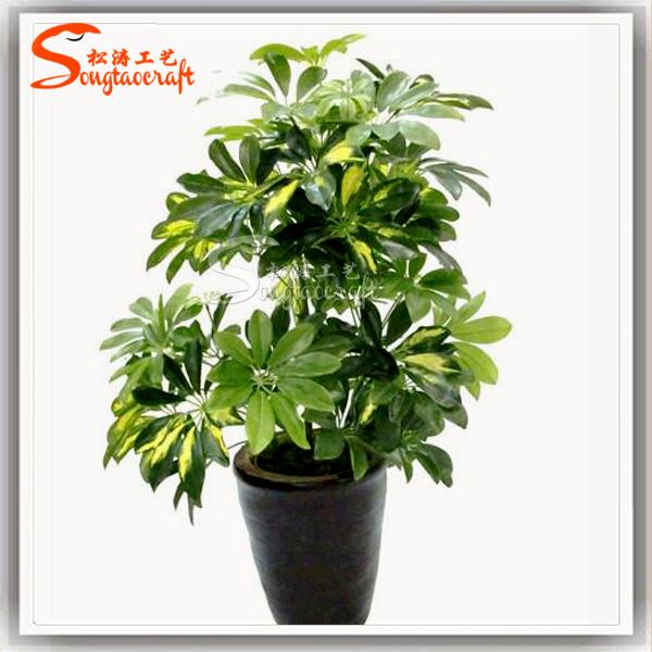 china latest schefflera arboricola plants artificial bonsai tree china bonsai tree artificial bonsai