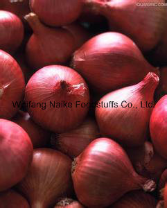 New Crop Fresh Onion Vegetable
