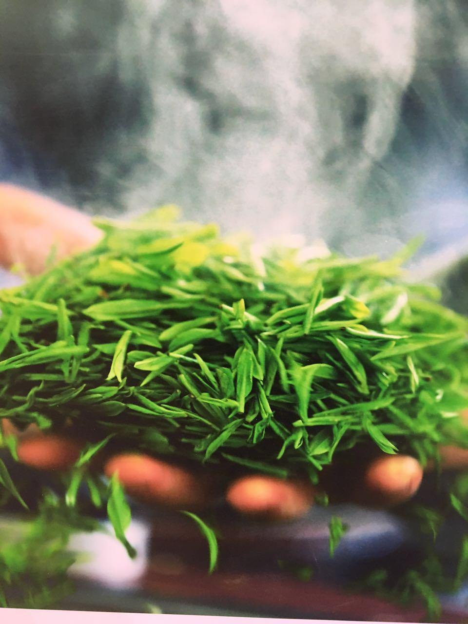 Euro Standard Green Tea