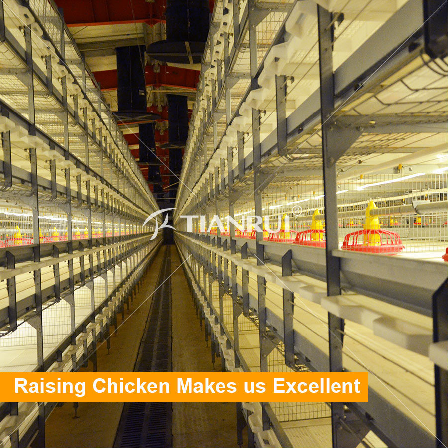 High quality automatic chicken cage for growing broiler