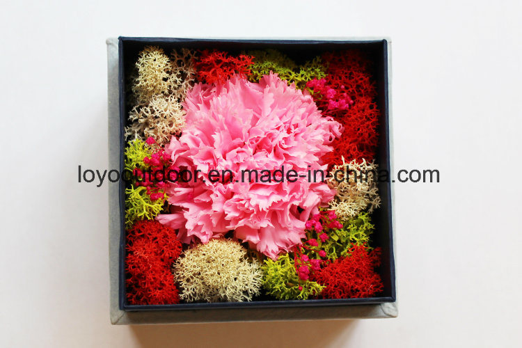 New Design Good Quality Preserved Roses Big Size in Glass Preserved Fresh Flowers