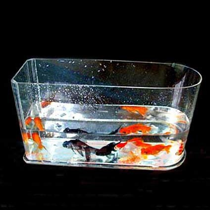 ... Clear Acrylic Rectangle Fish Tank, Clear Plastic Rectangle Fish Tank