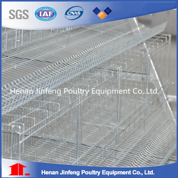 High Quality and Low Price Auto Design Pullet Chicken Cage