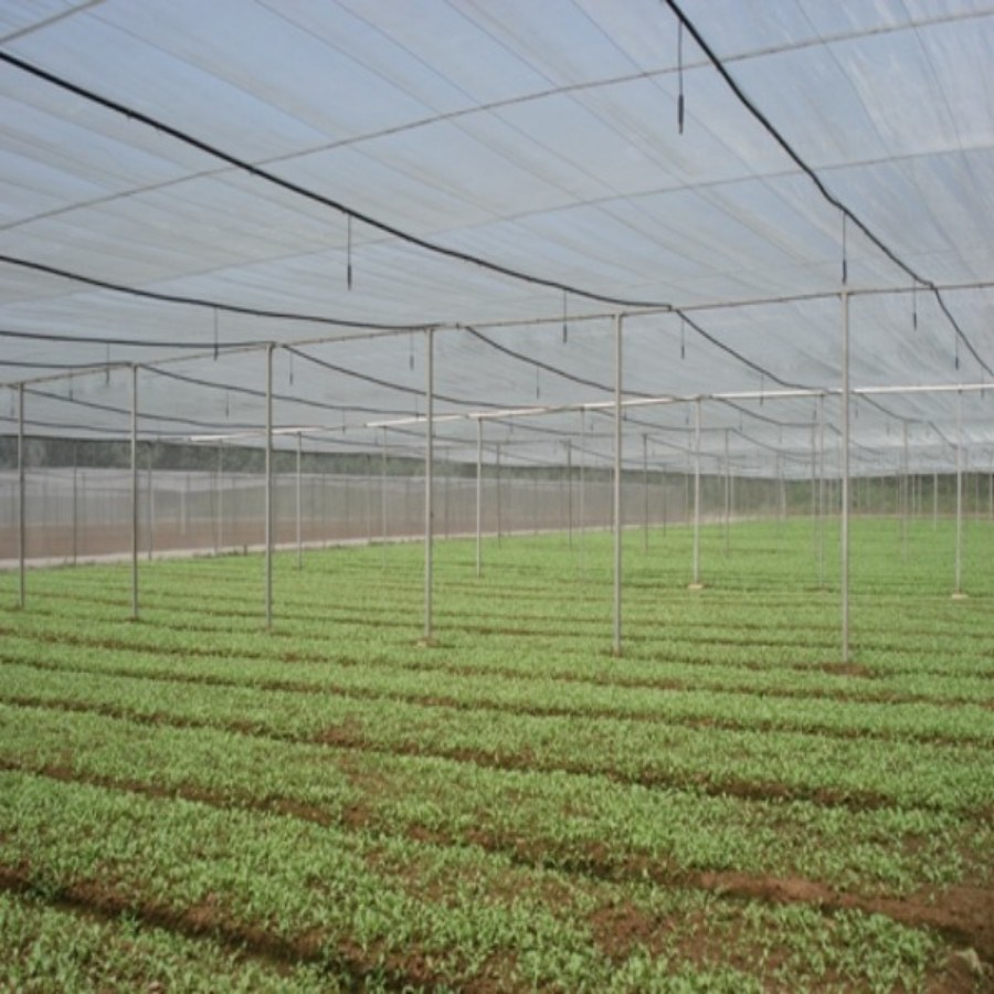 50mesh HDPE Anti Aphid Net