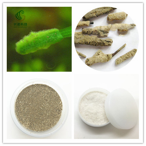 Medical Cosmetic Grade Hydrolyzed Sponge Natural Spongilla Spicule on Hot Sale