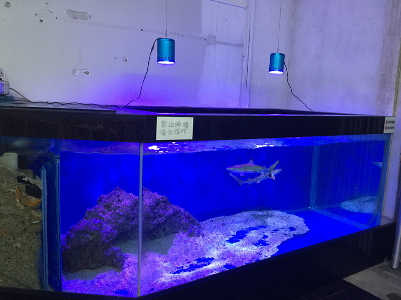 Wholesale Remote Control 60W LED Aquarium Lights