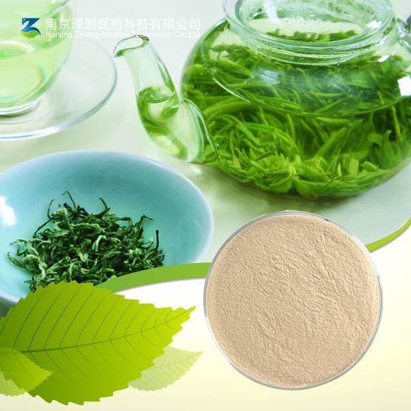 Epigallocatechin Gallate Powder Catechin EGCG Green Tea Extract
