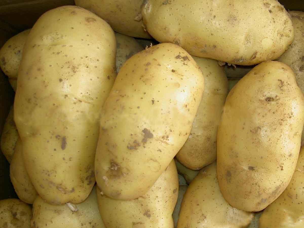 China potato china potato - What to do with potatoes ...
