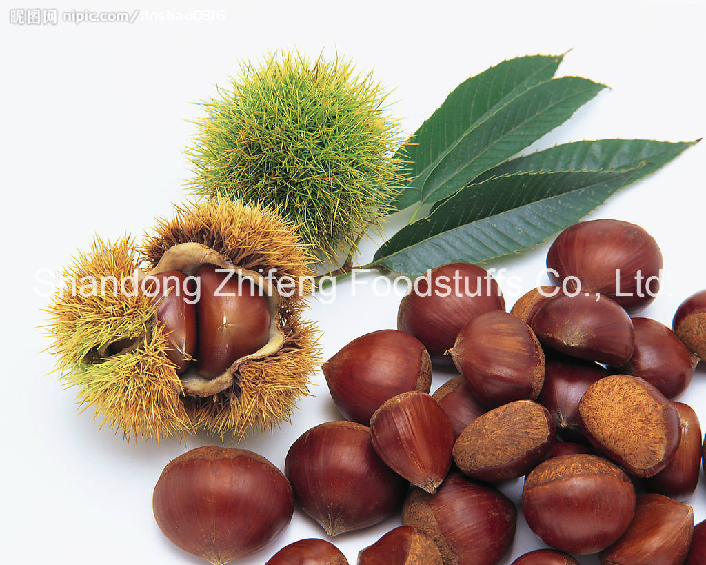 Organic Fresh Raw Chestnut